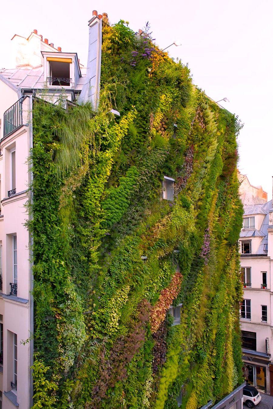 Pareti Verdi Verticali Costi giardini verticali - scuola del verde roma