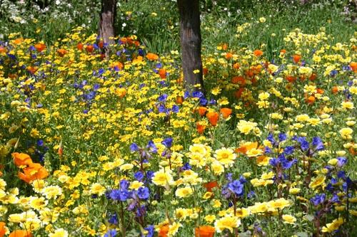 Planting-design