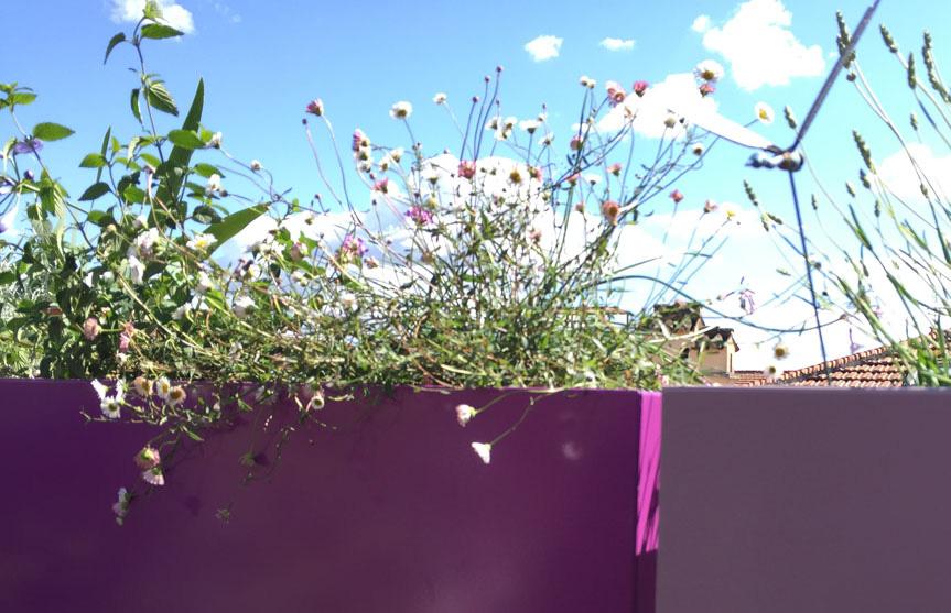terrazzi_fioriti